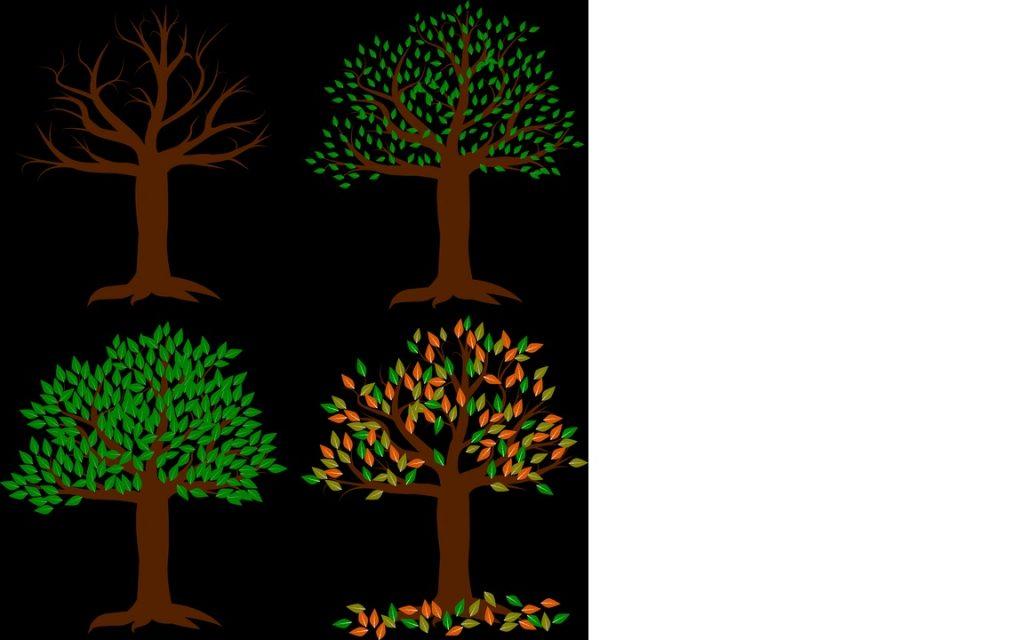 testul copacului